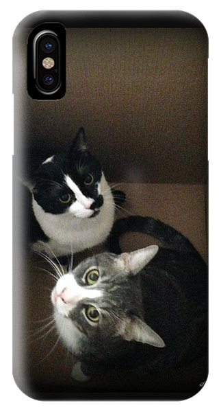 Cats In The Box IPhone Case