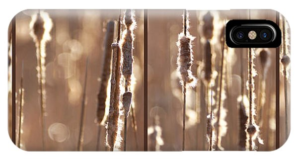 Cattails In The Light Phone Case by Leda Robertson