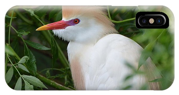 Cattle Egret In Breeding Season IPhone Case