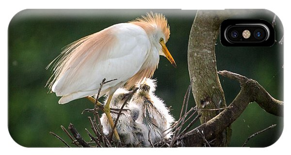 Cattle Egret Tending Her Nest IPhone Case