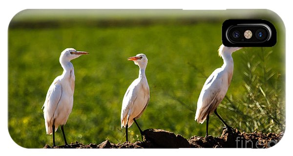 Cattle Egrets IPhone Case