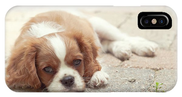 Cavalier Puppy IPhone Case