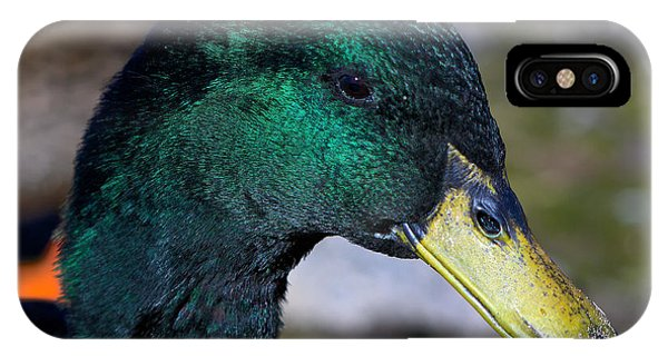 Cayuga Duck  IPhone Case