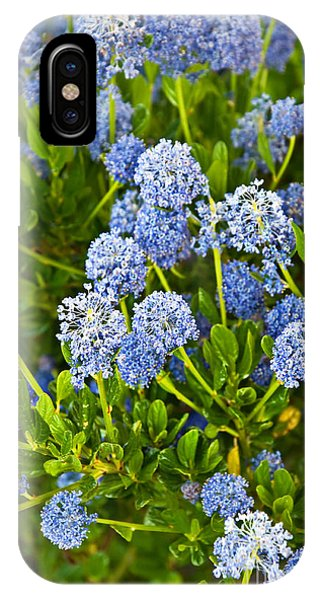 Ceanothus Impressus Santa Barbara Flowering Bush IPhone Case