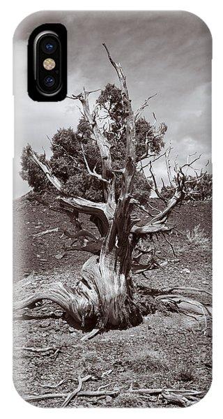 Cedar Landscape IPhone Case
