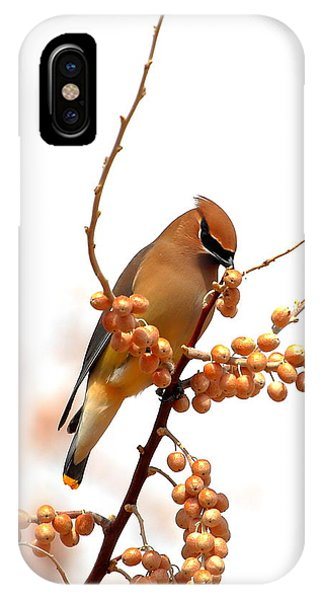 Cedar Wax Wing IPhone Case