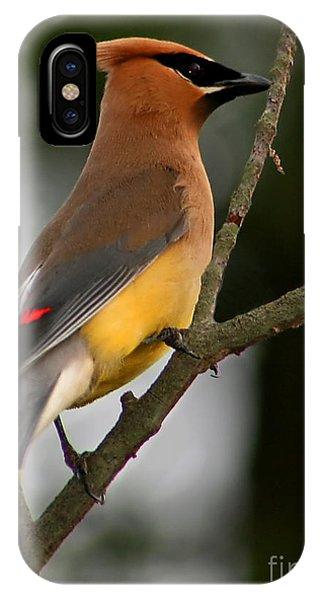 Cedar Waxing iPhone Case - Cedar Wax Wing II by Roger Becker