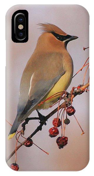 Cedar Waxwing IPhone Case