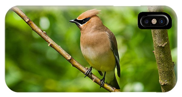 Cedar Waxwing Gathering Nesting Material IPhone Case