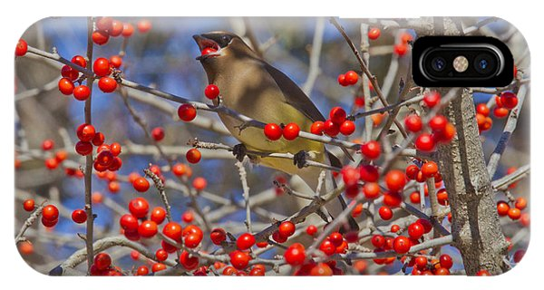 Cedar Waxwing In The Act Of Swallowing A Possumhaw Fruit IPhone Case