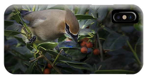 Cedar Waxwings  2012-2 IPhone Case