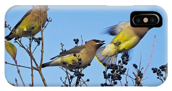 Cedar Waxwings And  Berries Phone Case by Constantine Gregory