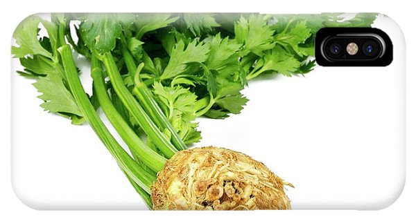Well Being iPhone Case - Celery Isolated On White by Wladimir Bulgar