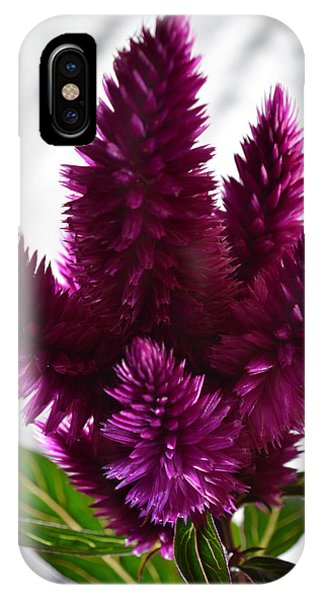 Celosia IPhone Case