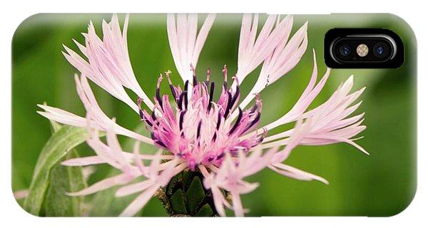 Centaurea Montana 'rosea' IPhone Case
