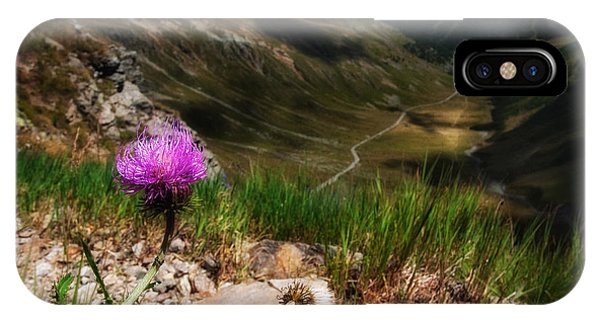 Centaurea IPhone Case