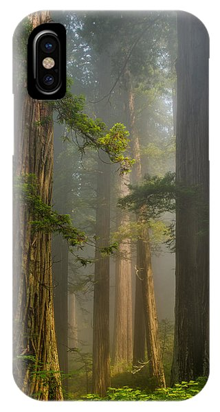 Center Of Forest IPhone Case