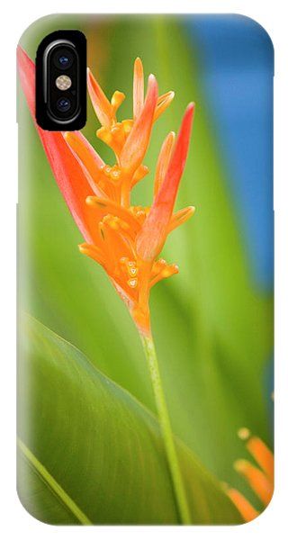 Belize iPhone Case - Central America, Belize, Placencia by John and Lisa Merrill