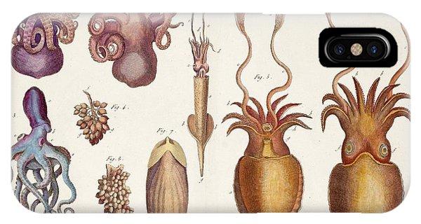 Squid iPhone Case - Cephalopod Molluscs by Paul D Stewart