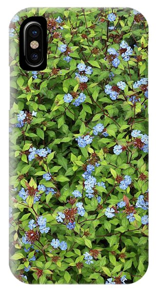 Deciduous iPhone Case - Ceratostigma Willmottianum by Geoff Kidd/science Photo Library