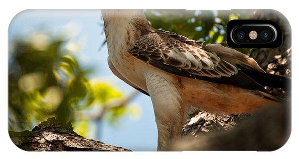 Ceylon Hawk Eagle IPhone Case