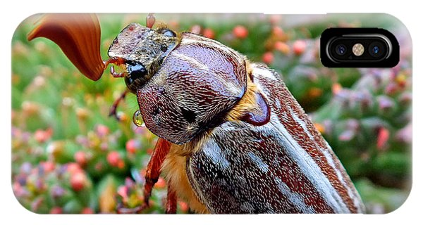 Chafer Beetle On Medusa Succulent 2 IPhone Case