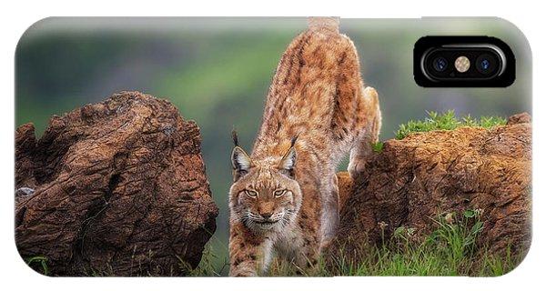 Lynx iPhone Case - Challenge by Sergio Saavedra Ruiz