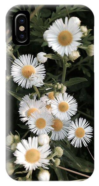 Chamomile Flowers. IPhone Case