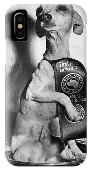 Chihuahua iPhone Case - Champion Chihauhau by Underwood Archives
