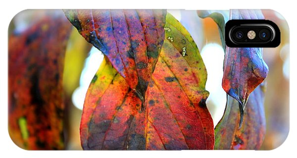 Changing Leaves Phone Case by Dorothy Hall