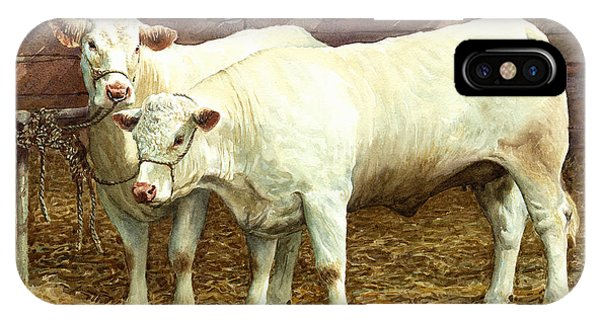 iPhone Case - Charolais Heifers by Anthony Forster