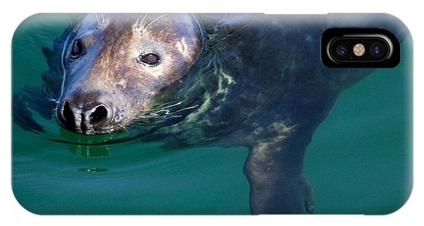 Chatham Harbor Seal IPhone Case