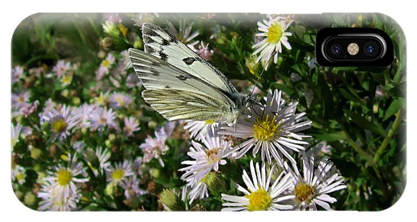 checkered white butterfly - Pontia protodice - 11SE06 Phone Case by Robert G Mears