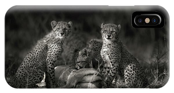 Cheetah Cubs IPhone Case