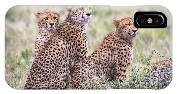 Cheetah Family IPhone Case