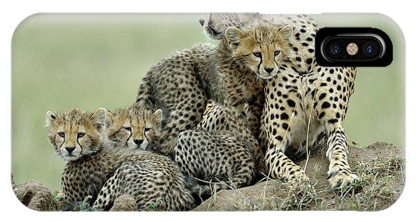 Hug iPhone Case - Cheetah by Giuseppe D\\\amico