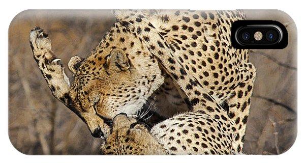 Cheetah Play IPhone Case