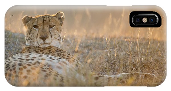 Cheetah Prepares To Sleep Phone Case by Richard Berry