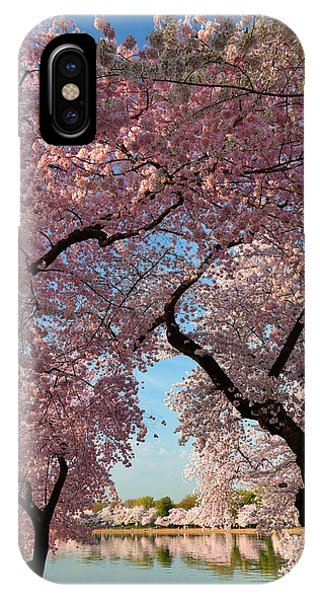 Cherry Blossoms 2013 - 024 IPhone Case