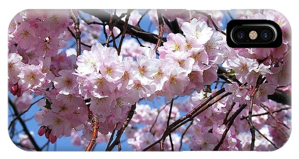 Cherry Blossom Trees Of Branch Brook Park 3 IPhone Case