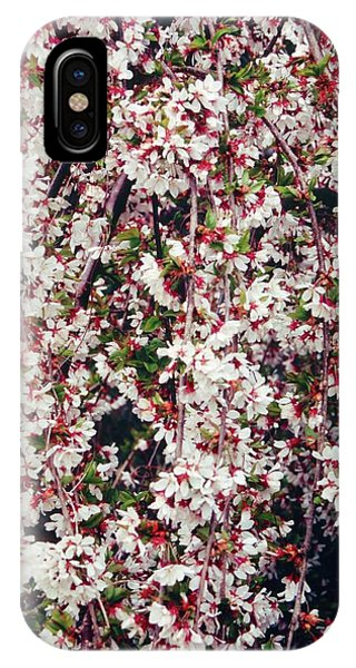 Cherry (prunus 'snow Showers') Phone Case by Mrs W D Monks/science Photo Library