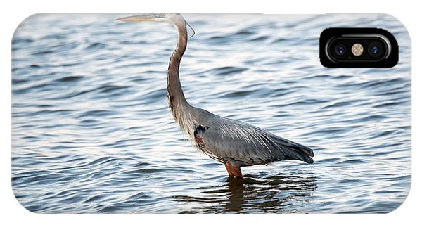 Chesapeake Bay Blue Heron IPhone Case