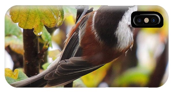 Chestnut-backed Chickadee IPhone Case