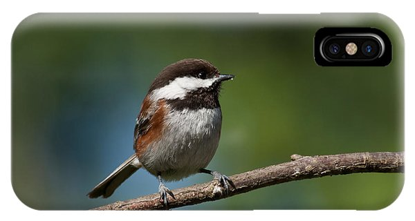 Chestnut Backed Chickadee Perched On A Branch IPhone Case