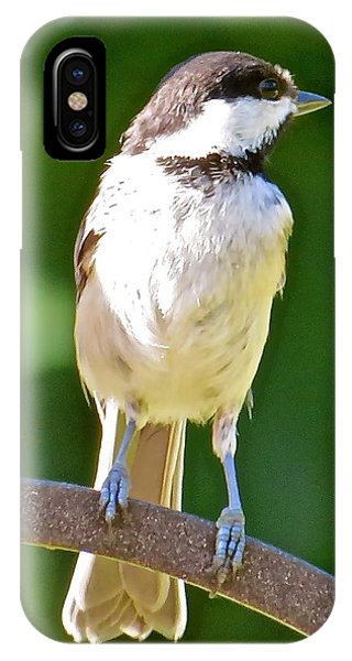Chickadee 101 Phone Case by Patsy Pratt