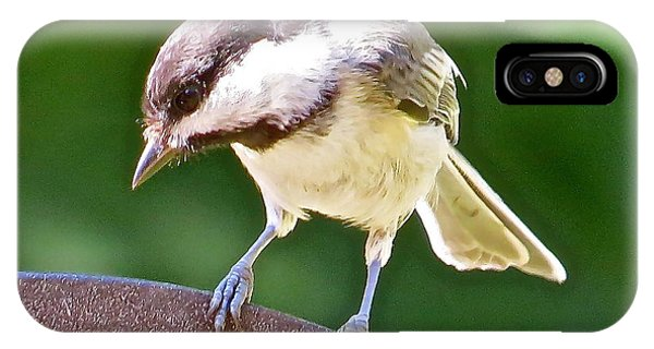 Chickadee 102 Phone Case by Patsy Pratt