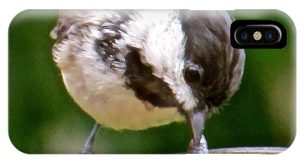 Chickadee 103 Phone Case by Patsy Pratt