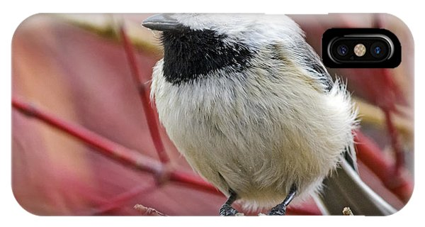 Chickadee In Red Twig Dogwood IPhone Case