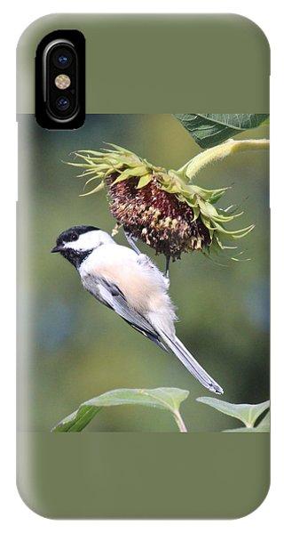 Chickadee On Sunflower IPhone Case