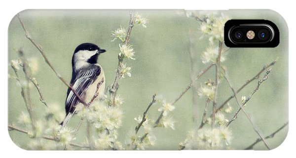 Chickadee IPhone Case